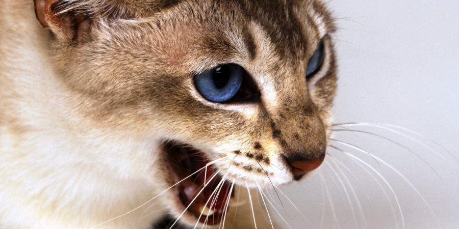 Признаки скорой смерти у кота