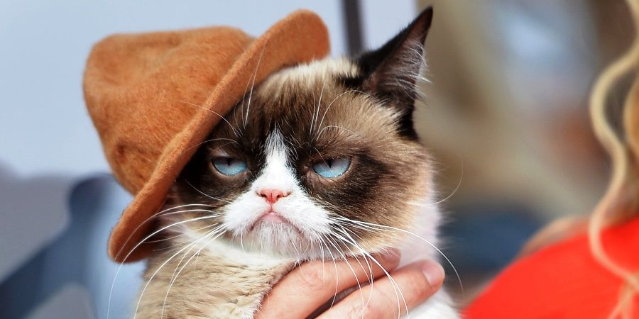 Что поможет коту от запора в домашних условиях 856