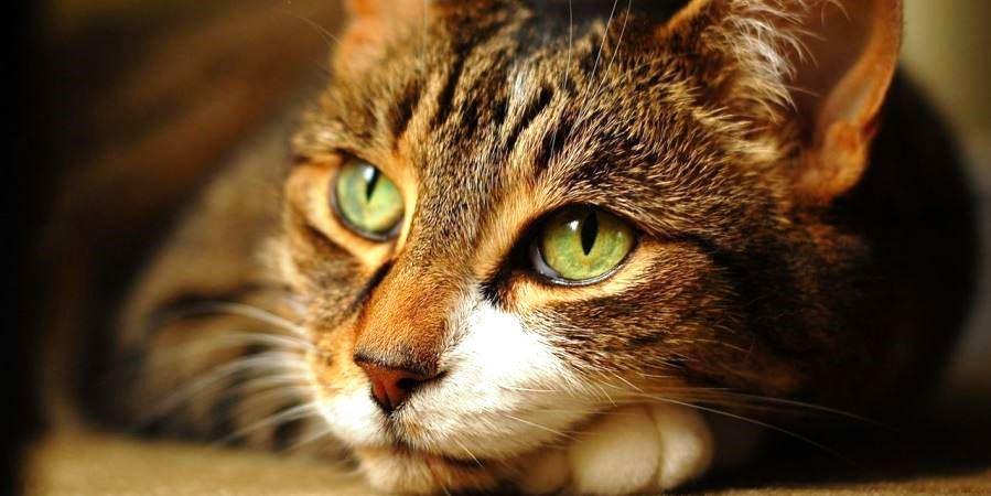 Корм Royal Canin для кошек - отзывы ветеринаров и