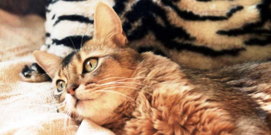 Корм для кішок Роял Канін (Royal Canin) – відгуки і поради