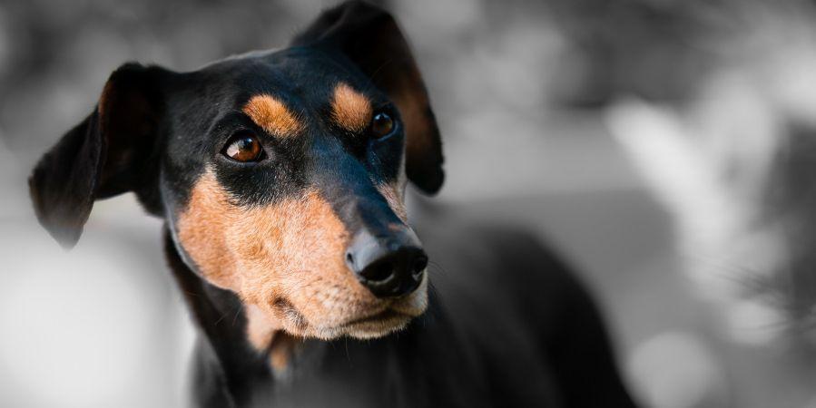 Судороги у собаки причины
