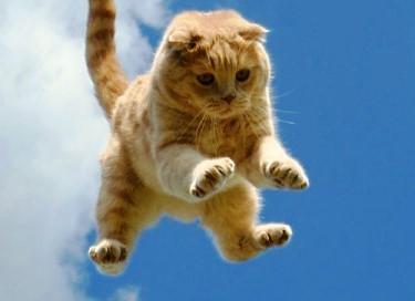 Что делать если кот упал с 7 этажа